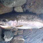 20130607_trout-prostaff_kibe-tatsuo_202380-05