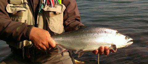 trout-blog20140623950-4
