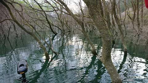 冠水ジャングル