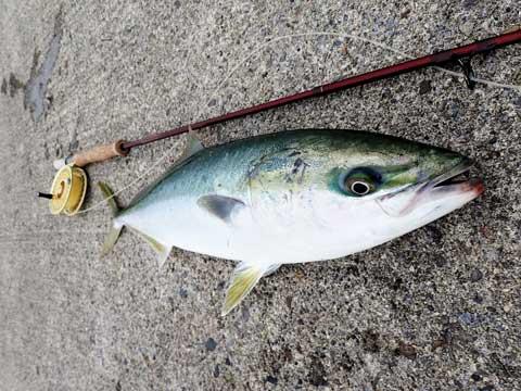 同じ魚です#1